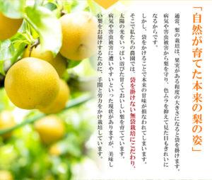 自然が育てた本来の梨の味