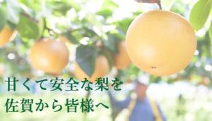 梨のこだわり
